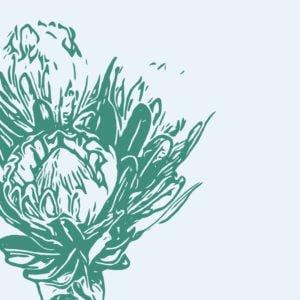 Illustration Protea