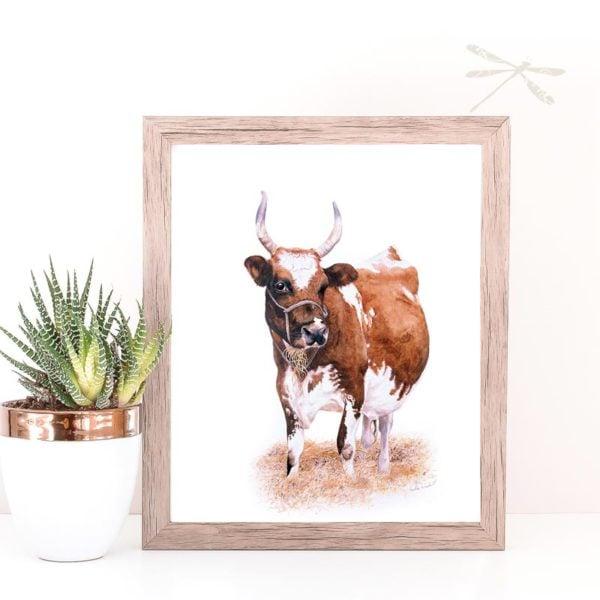 Ayrshire Cow print framed